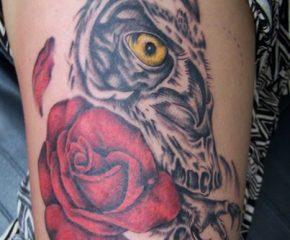 owl-copy