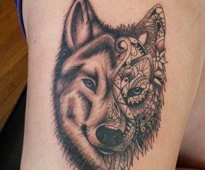 wolf aug 24 17