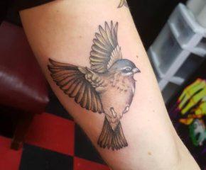 bird march 21 19