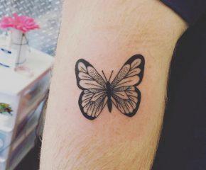 butterfly dec 3rd 2019