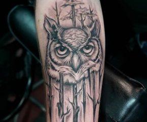 owl aug 4 21