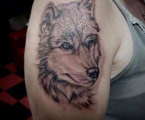 wolf aug 4 21